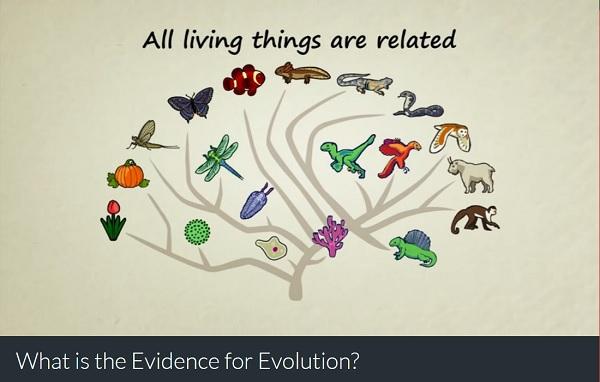 evolution-everthing-related
